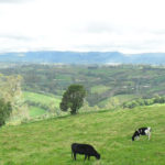 Geografía, división política y Límites del municipio de Pupiales