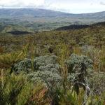 Ecología del municipio de Pupiales