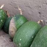 Tipos de Calabaza: cuál es la calabaza blanca